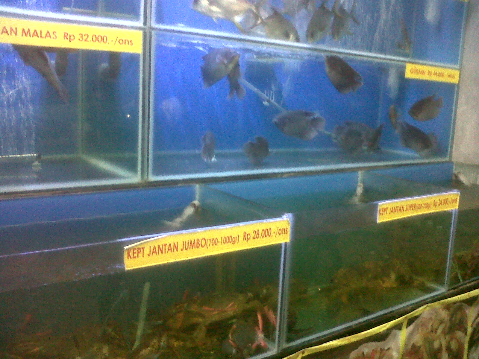 surabaya daun lada fish tank to choose oct13