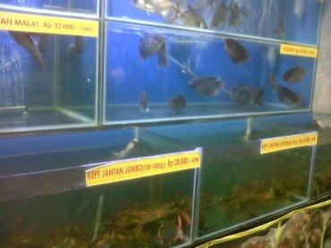 surabaya daun lada fish tank to choose oct13