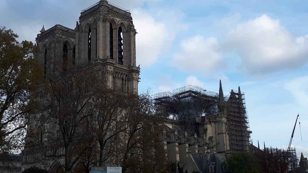 paris cat notre dame cat under repairs nov19