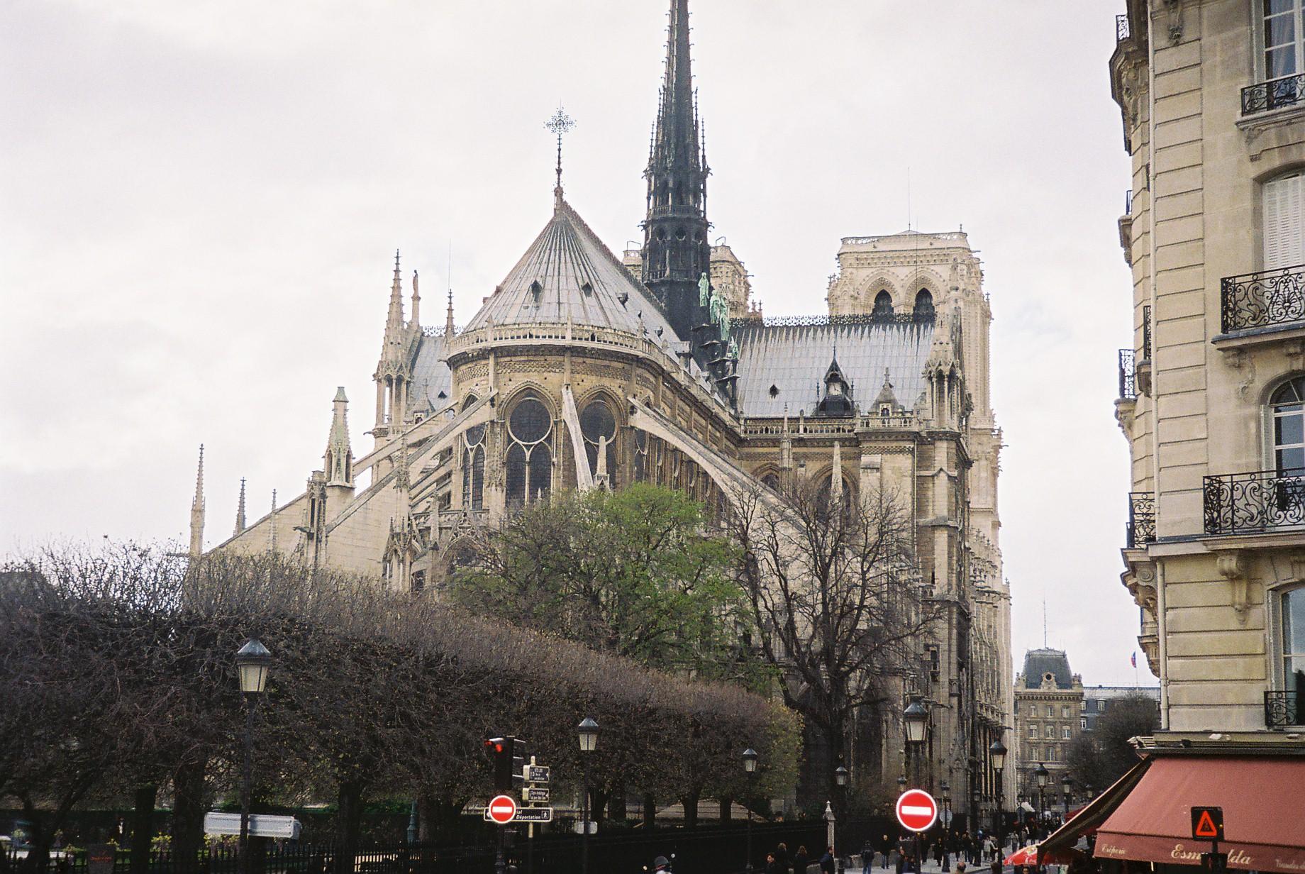 Paris Cat Notre Dame rue du cloitre back 2009