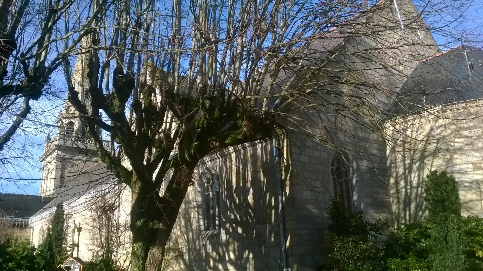 ploemeur ch st pierre side old tree jan18