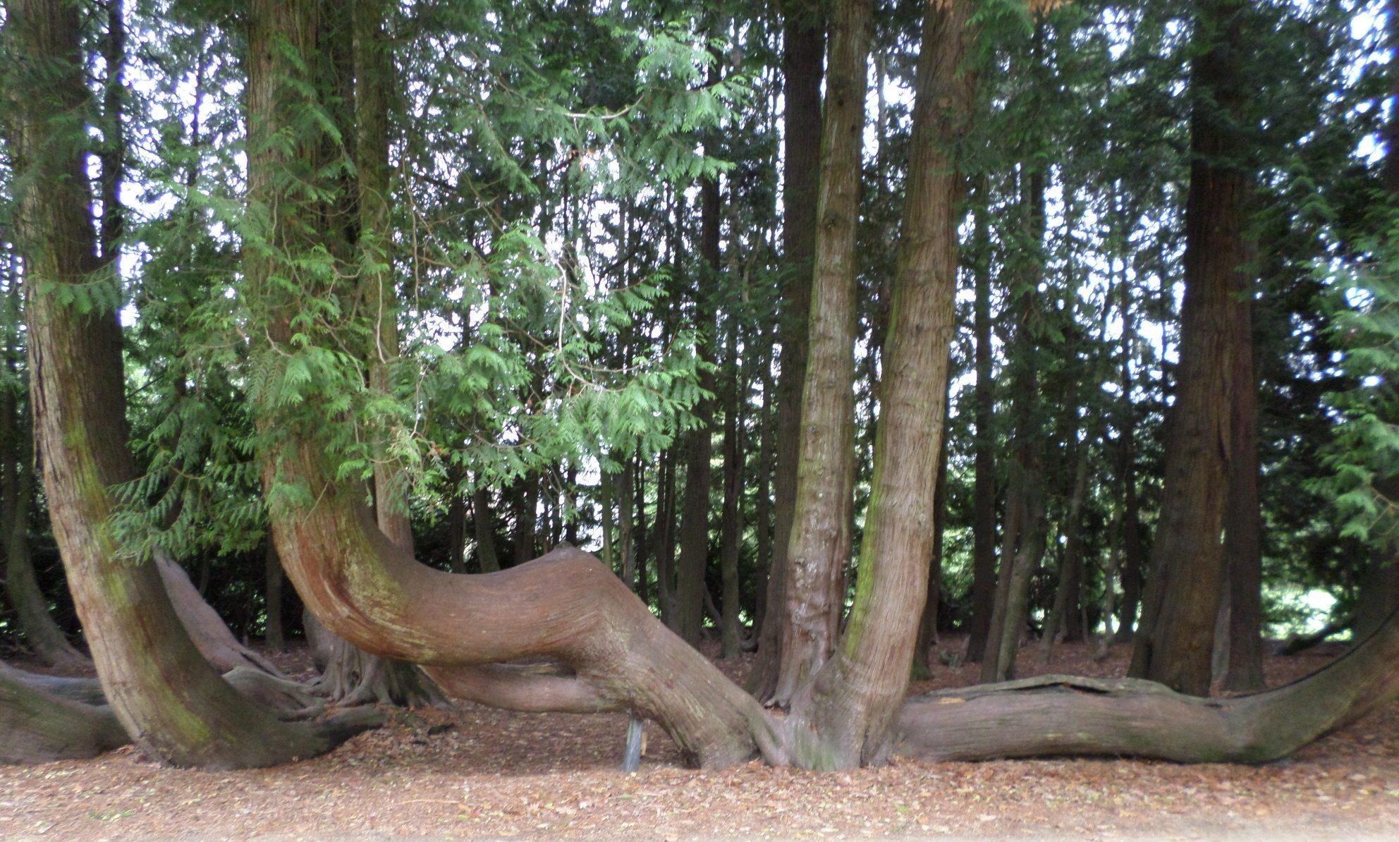 vitre-jardin-du-parc-curved-tree-on-canopy