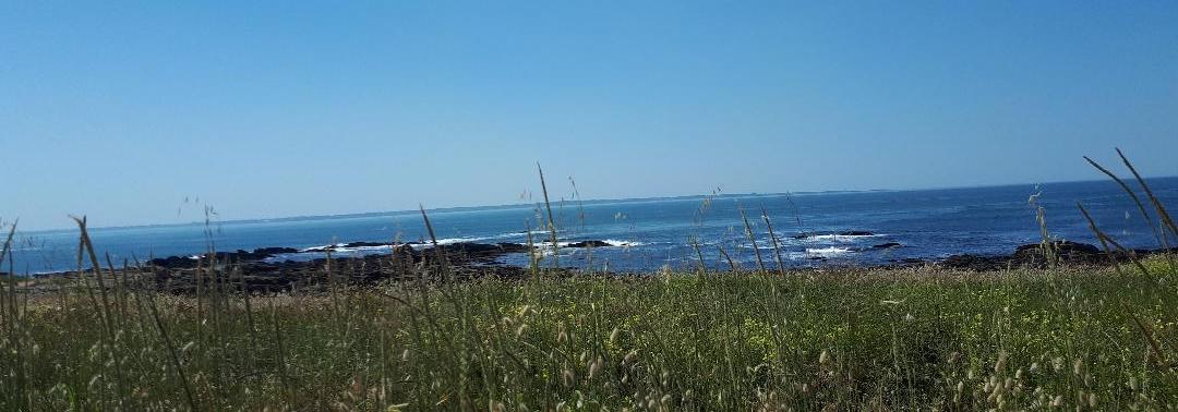 quiberon-pointe-du-conguel-reef-may20
